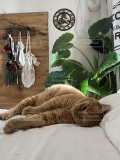 ベッドに横たわる猫の写真・画像素材[3368635]
