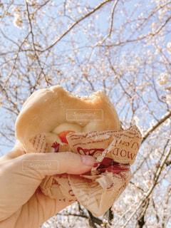 ピクニックの写真・画像素材[4276054]
