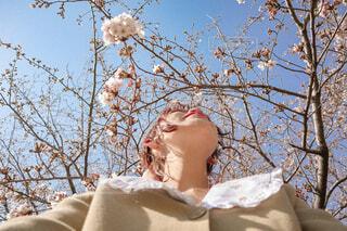 桜と青空の写真・画像素材[4276056]