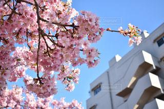 空,花,春,さくら,ブロッサム