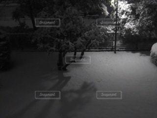 風景,冬,夜,雪,白,静寂,季節,雪景色,シルエット,樹木,灯り,寒い,静けさ,街頭