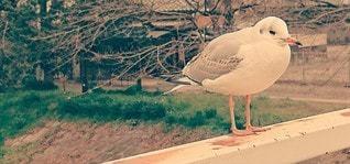 風景,橋,動物,鳥,屋外,昼間,鳥類