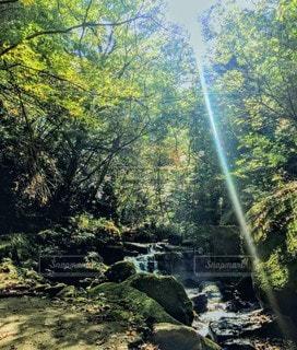 木漏れ日と滝の写真・画像素材[3001718]