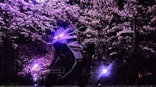 花,桜,木,屋外,花見,景色,樹木,さくら