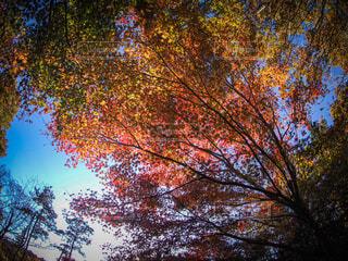 紅葉の虹の写真・画像素材[3844591]
