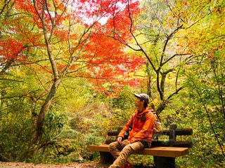 秋を満喫の写真・画像素材[4011563]