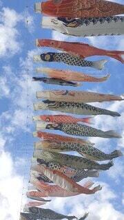 泳ぐ,鯉のぼり,こどもの日,5月,高い,行事
