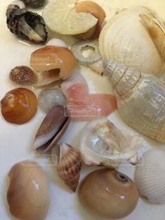たくさんの貝の写真・画像素材[3052418]