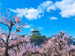 大阪城と梅の花の写真・画像素材[3015616]