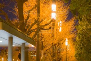 夜,屋外,東京駅,樹木,明るい,街路樹