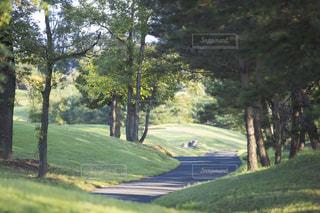 屋外,草,樹木,新緑,ゴルフ,ゴルフ場,カート道