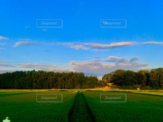 自然,風景,空,青空,夕方,田舎,夕陽,草木,たんぼ