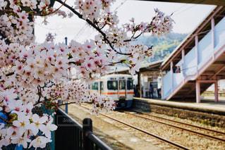 花,春,桜,木,駅,電車,線路,花見,満開,お花見,イベント,鉄道,日中,御殿場線