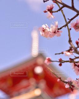 須磨寺の写真・画像素材[3028124]