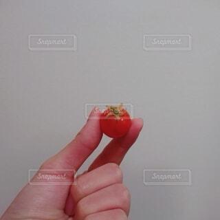 食べ物,赤,かわいい,ガーデニング,手持ち,トマト,野菜,人物,ポートレート,ライフスタイル,食材,手元,おしゃれ,ガーデン