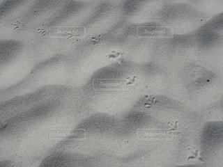鳥,砂,ビーチ,足跡