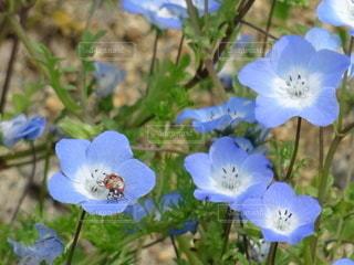 花,草,てんとう虫