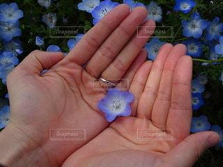 花,手,持株