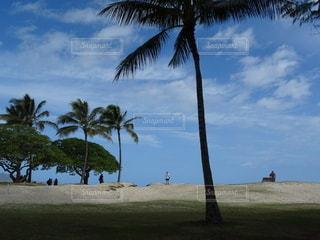 ビーチ,砂浜,ヤシの木,パーム