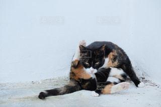 マルタの猫に睨まれた。の写真・画像素材[3008523]