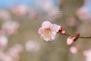 春爛漫の写真・画像素材[3035811]