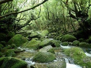 屋久島のトレッキング途中の風景の写真・画像素材[3146291]