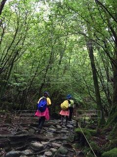 屋久島のトレッキングの写真・画像素材[3146322]