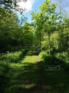 ヨーロッパの公園を歩くの写真・画像素材[3157855]