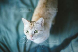 おねだりする猫の写真・画像素材[4254812]