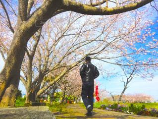 桜,南房総,道の駅とみうら