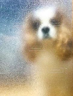 犬,シルエット,モザイク,覗き,ストーカー