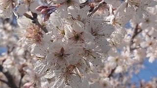 花,樹木,草木,ブロッサム