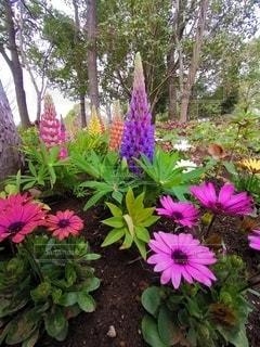 花,春,屋外,カラフル,鮮やか,樹木,草木,ガーデン,フローラ