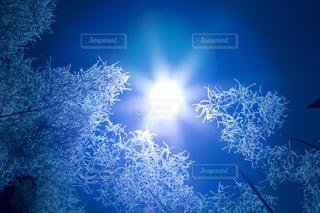 風景,空,花,冬,木,屋外,太陽,森,植物,きれい,綺麗,青空,青,青い空,林,景色,光,美しい,ブルー,寒い,冷たい,クール,青色,冬空,イメージ,日中,まぶしい,キレイ,カッコイイ,澄んだ