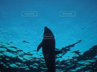 気持ちよく泳ぐイルカの写真・画像素材[3015971]