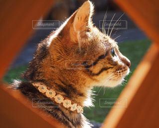 猫,動物,にゃんこ,庭,かわいい,景色,鮮やか,オレンジ,ペット,子猫,日向ぼっこ,美猫,キジトラ