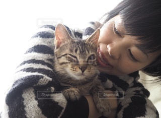 愛猫の写真・画像素材[3360788]