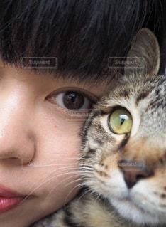 私と愛猫の写真・画像素材[3360870]