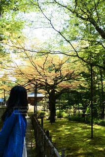 女性,1人,風景,屋外,草,樹木,人,草木
