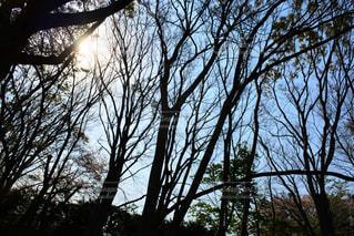自然,風景,森林,屋外,木漏れ日,樹木,日中