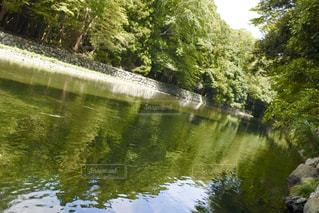 自然,屋外,川,水面,景色,樹木,涼しげ,草木