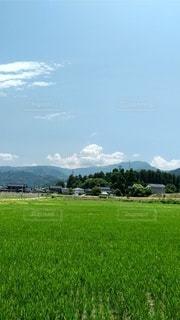 田園風景の写真・画像素材[3328757]