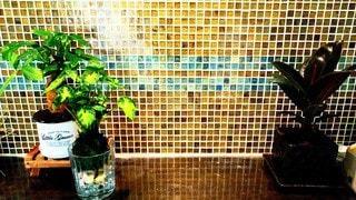 観葉植物の写真・画像素材[3338392]