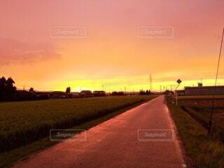 濡れたアスファルトに夕陽が反射の写真・画像素材[4836612]