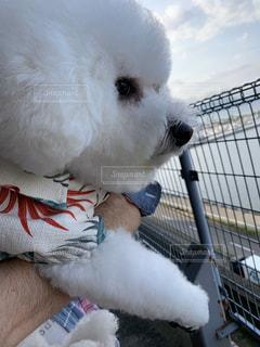 犬,動物,白