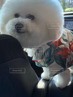 犬,動物,白,かわいい,座る