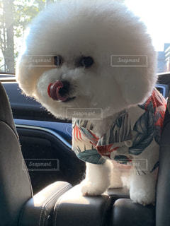 犬,動物,白,座る,座席
