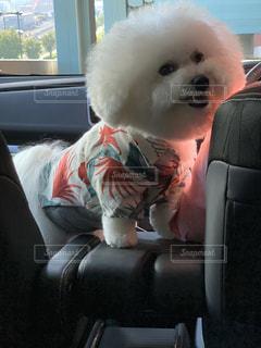犬,動物,座る,座席
