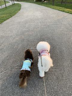 2人,犬,屋外,草