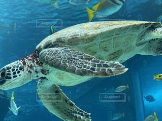 動物,水族館,水面,水中,カメ,爬虫類,亀